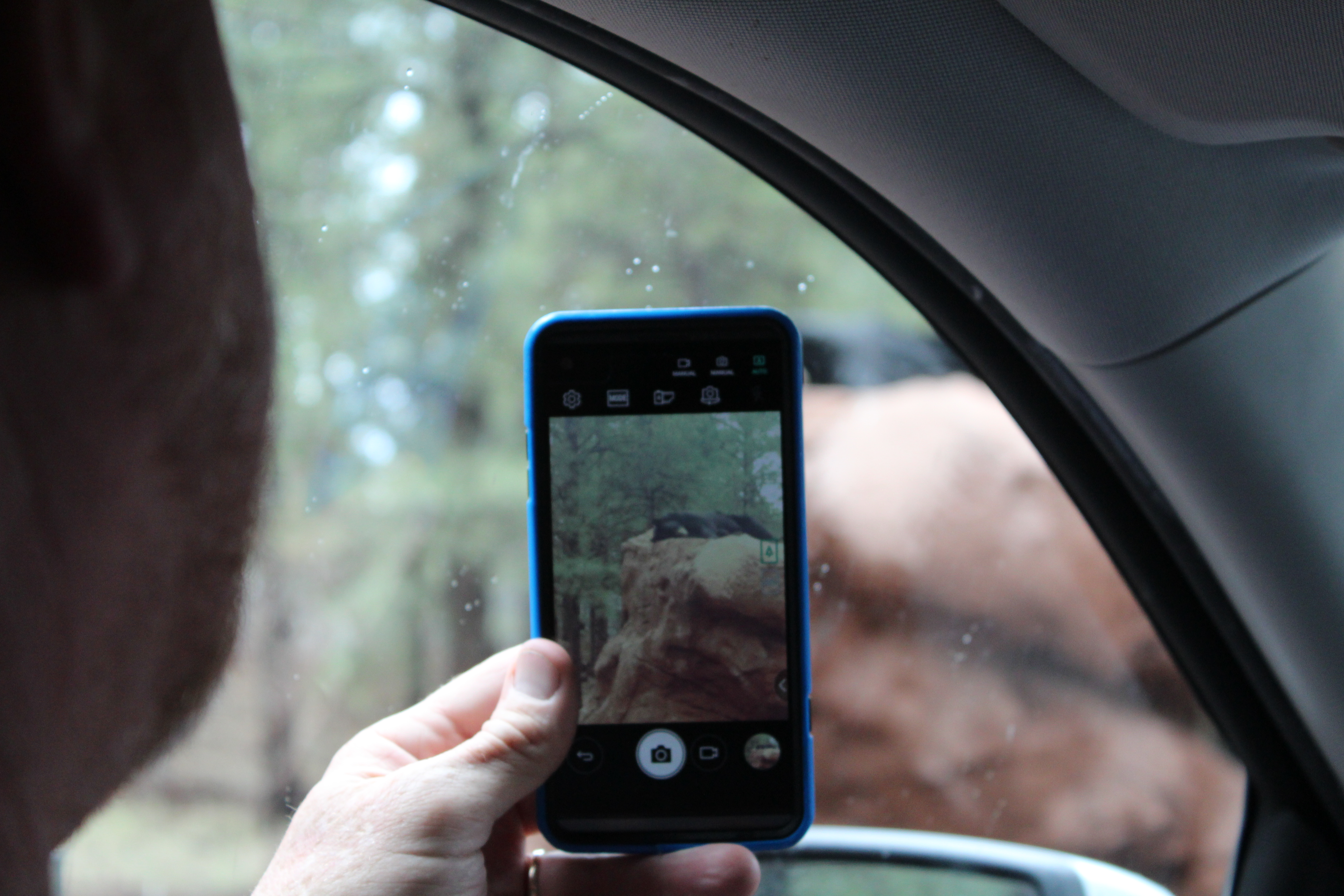 A picture of a man taking a photo of a bear with his cell phone.